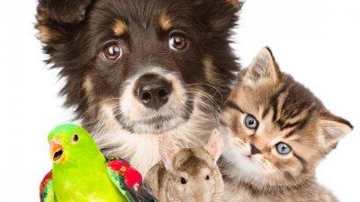 Frases de animais que servem de exemplo para todos nós