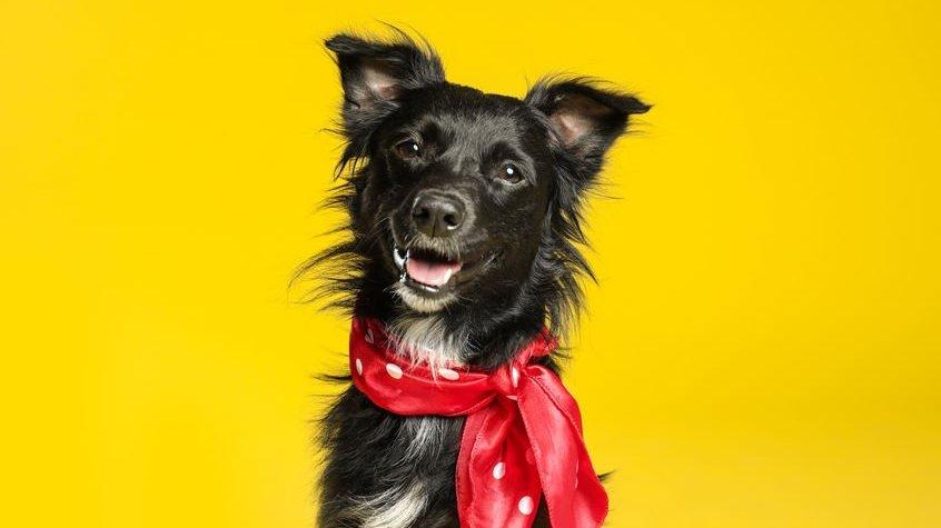 Cachorro com laço no pescoço