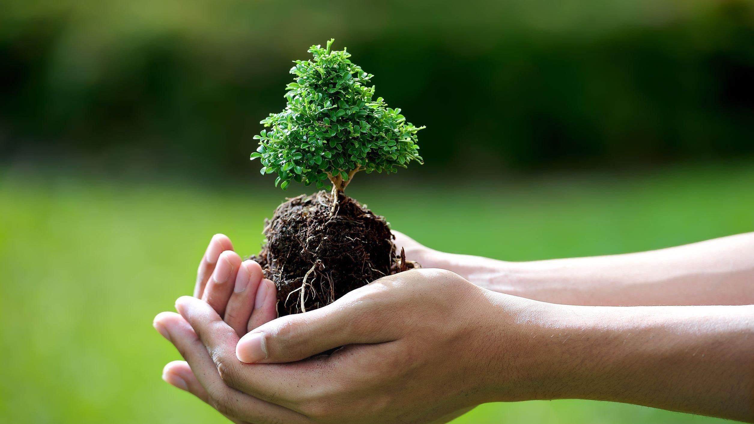 Mãos segurando uma pequena planta.