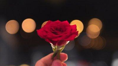 Pessoa segurando uma rosa à noite.