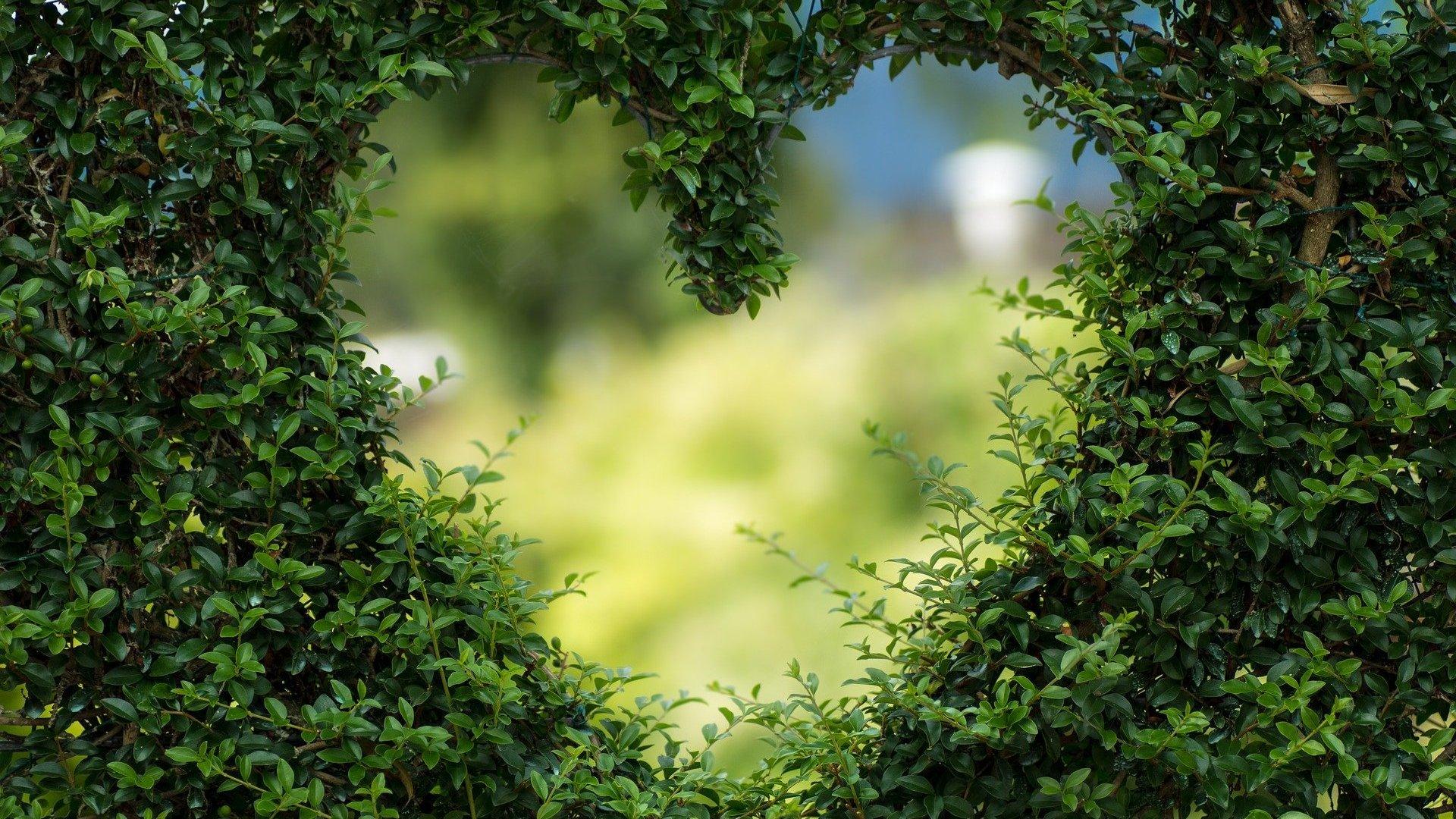 Imagem de planta em formato de coração