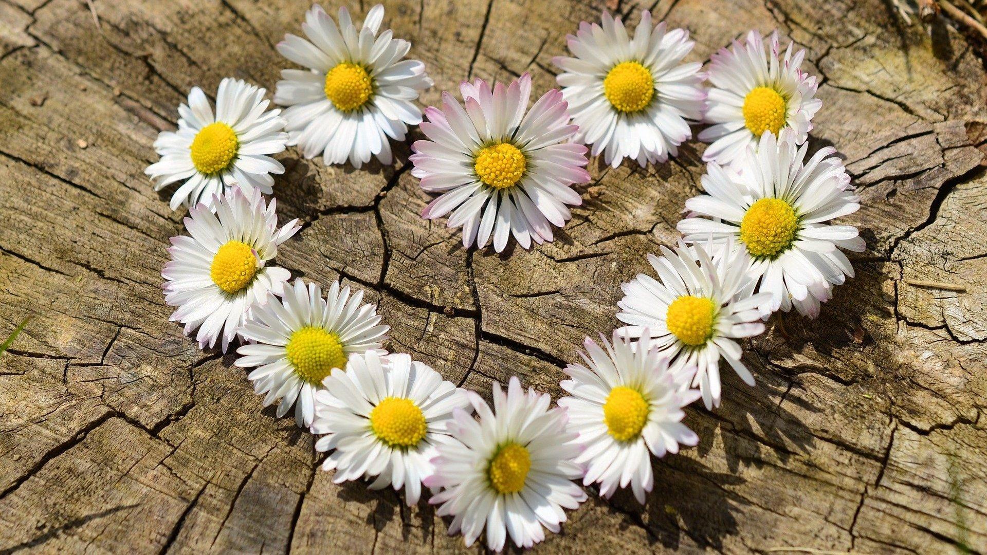 Imagens de flores formando um coração