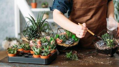 Imagem de plantas em cima de mesa