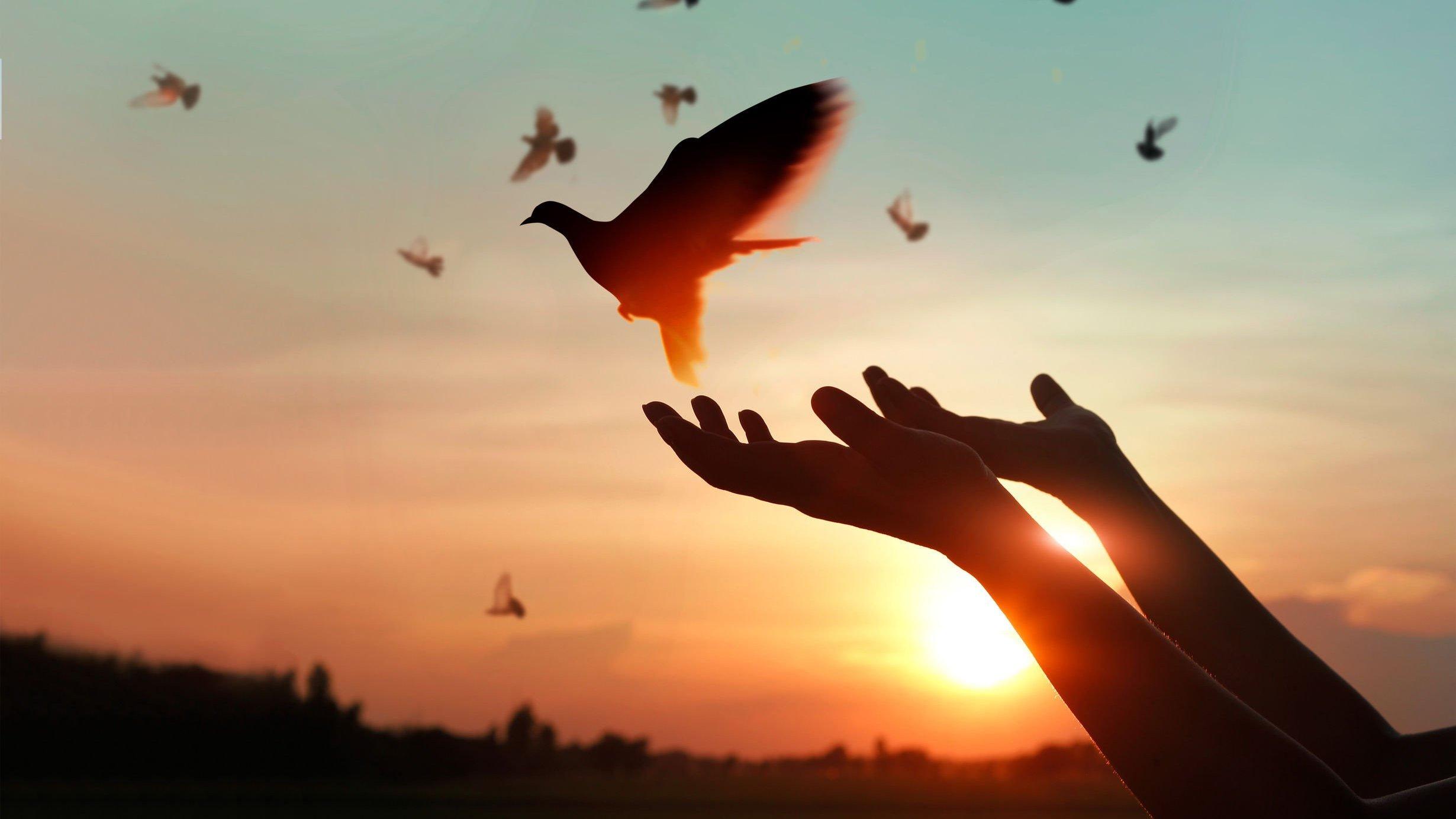 Mãos soltando uma pomba durante o pôr do sol, enquanto várias outras pombas voam no céu.