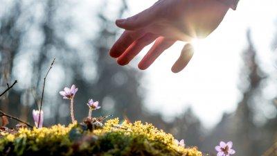 Mão em direção a flor nascendo com sol ao fundo refletindo