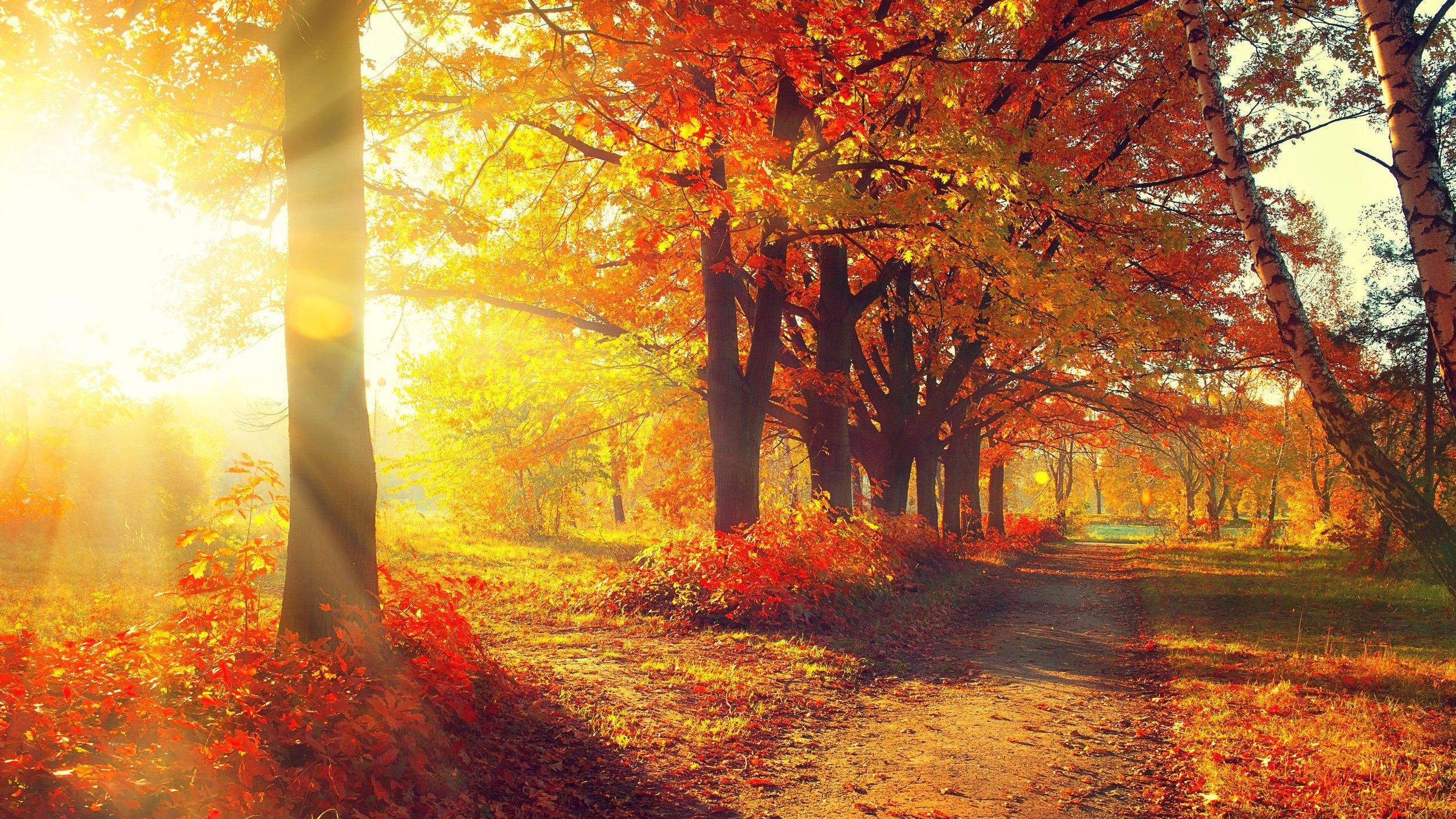 Foto de árvores