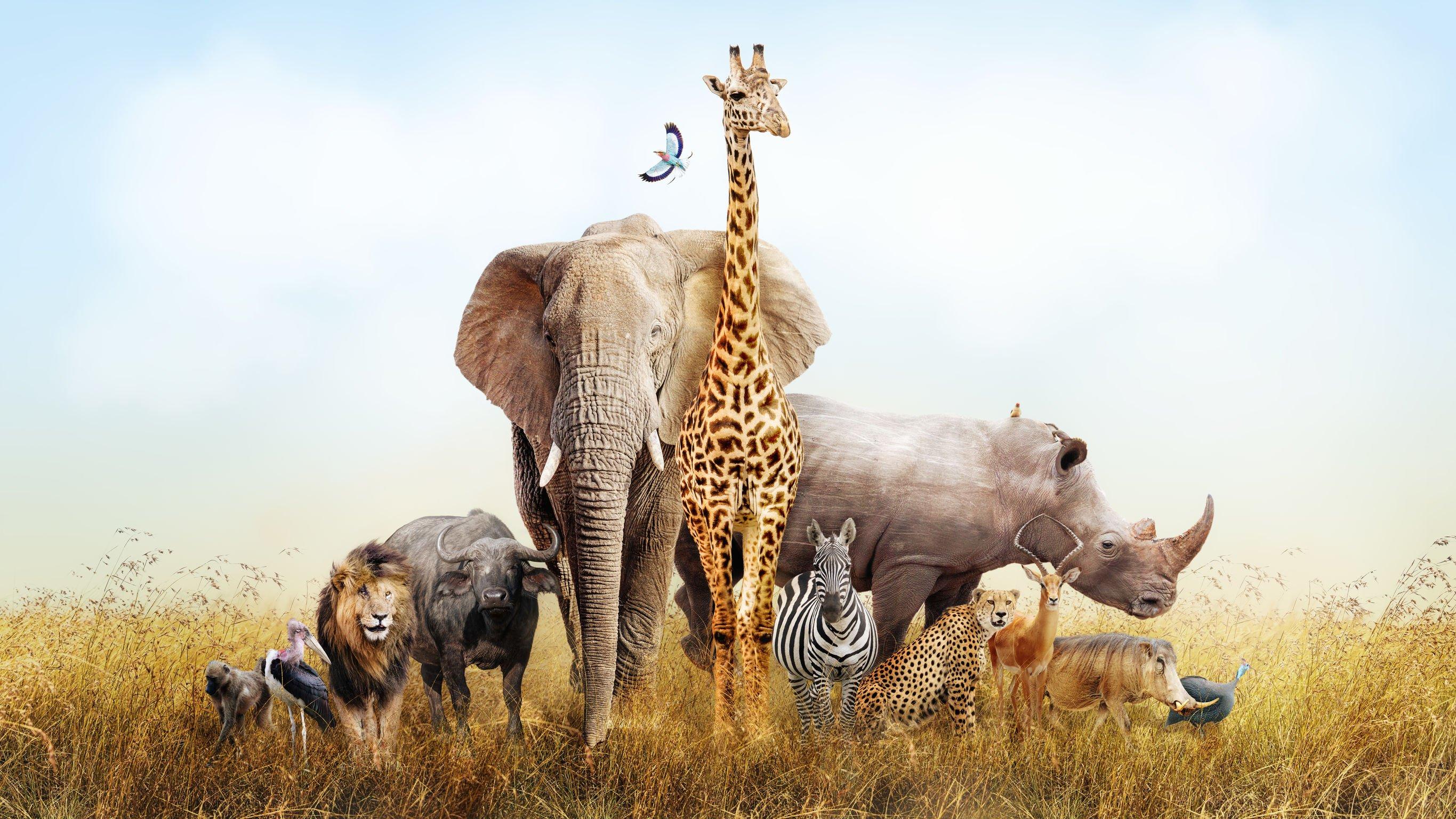 Composição de um grupo de animais selvagens.