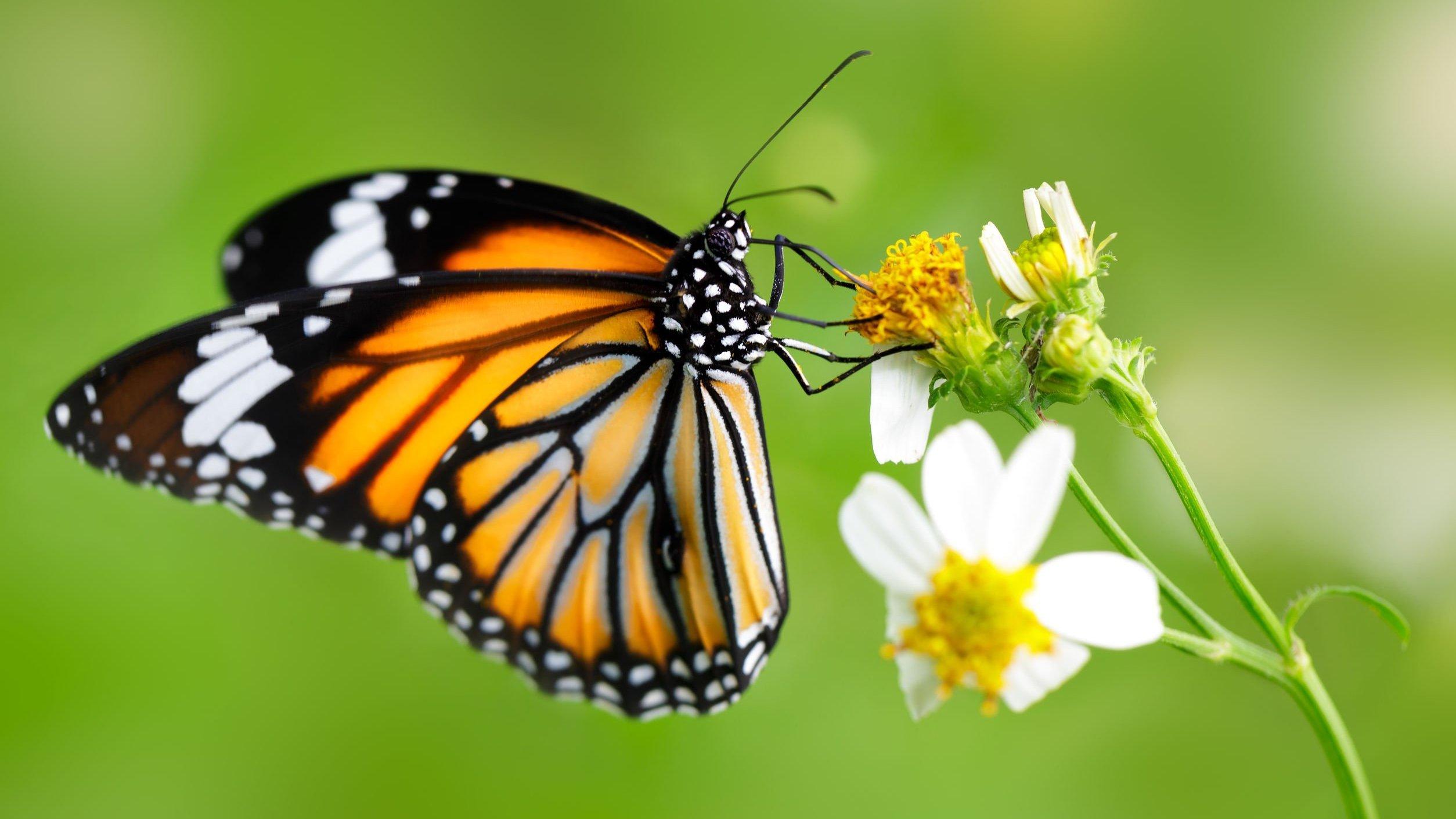 Foto de borboleta