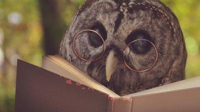 Coruja lendo e usando óculos