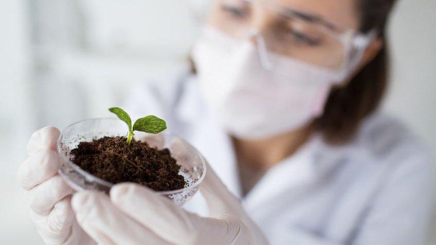 Bióloga examinando amostra de planta