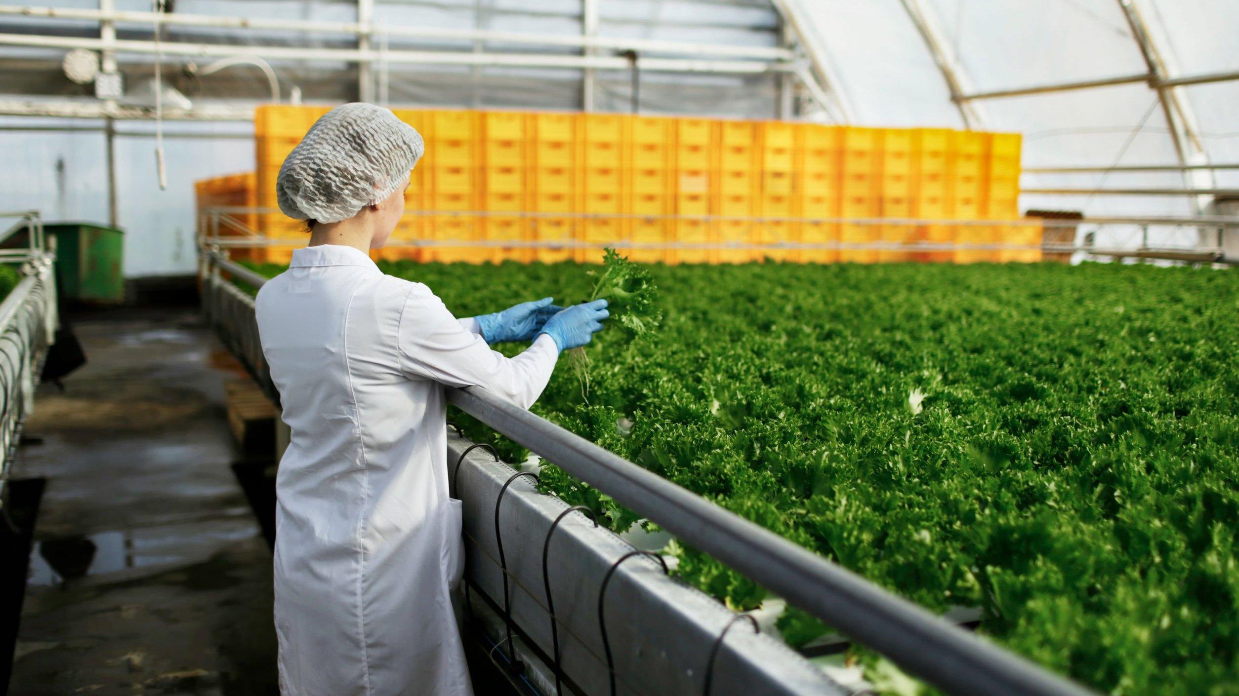Mulher realizando o controle de qualidade de alimentos
