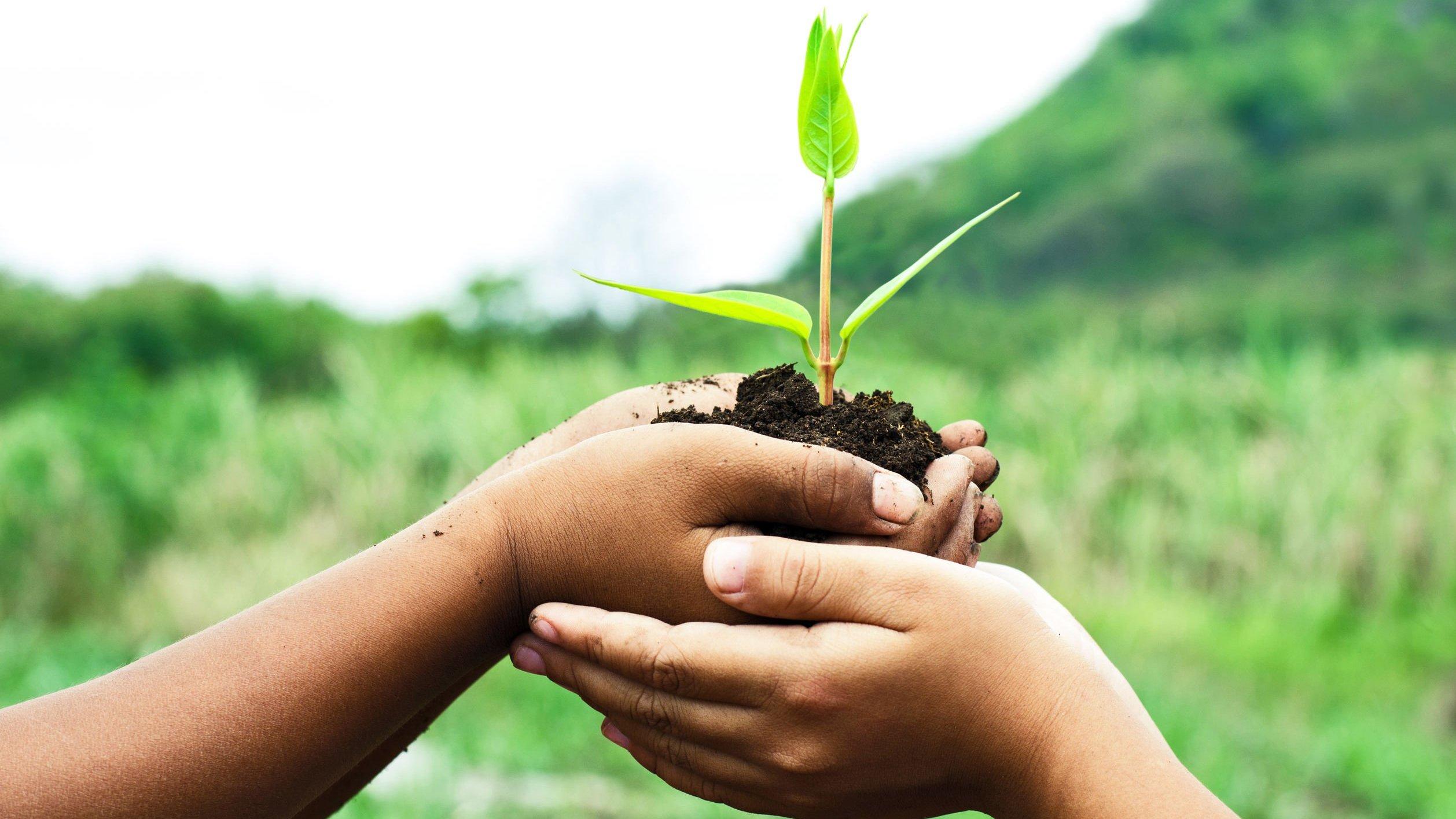Muda de planta é segurada por duas mãos de criança